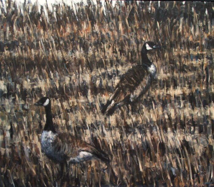Geese, Slapton Ley