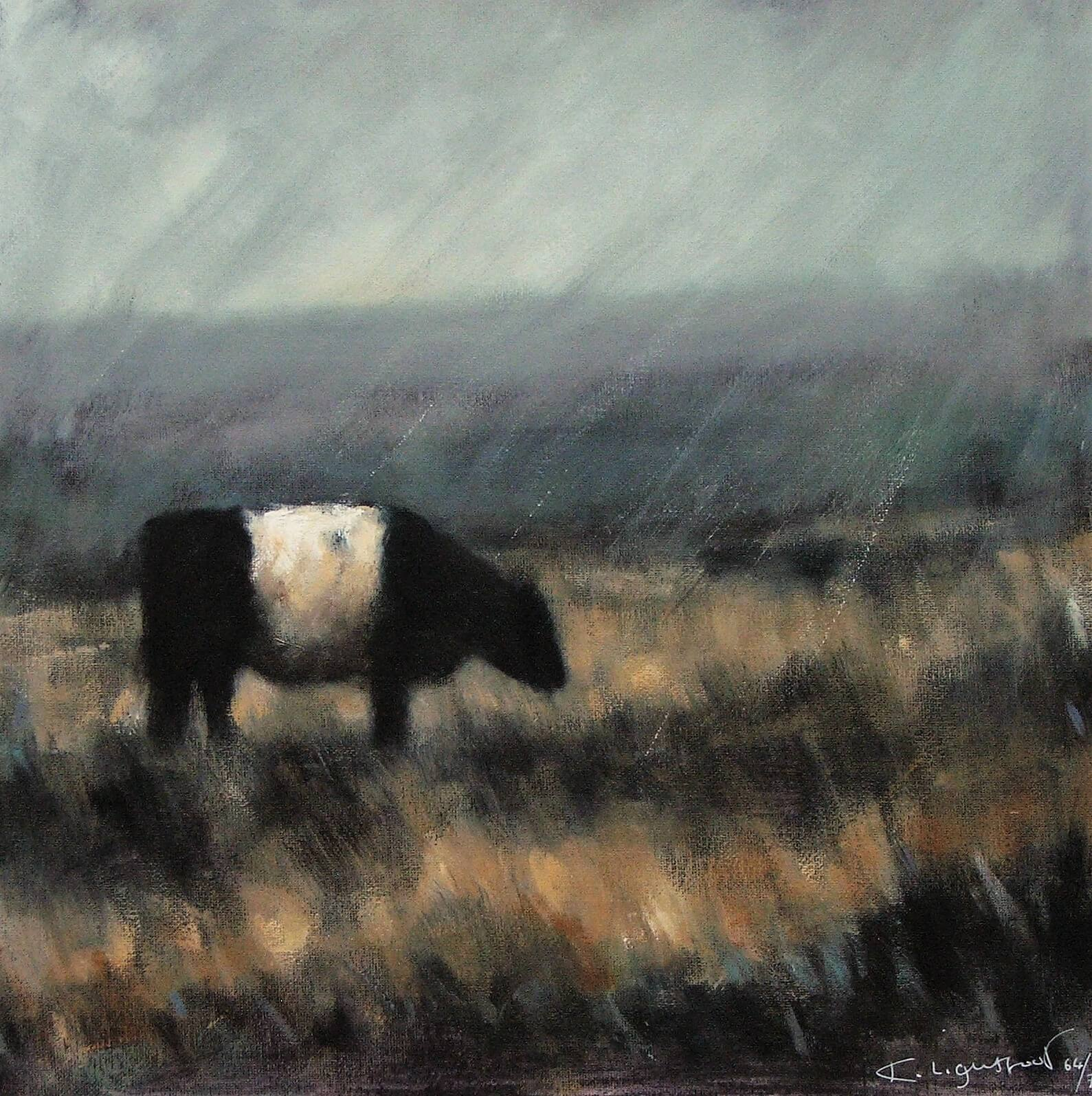Belted Galloway
